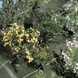 AGROSOL talajtakaró zöld 1,25x10 m