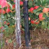 FLEXGUARD TREEX (3) ø 15cm/110cm fekete